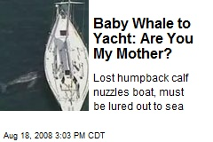 Baby Whale to Yacht: Are You My Mother?