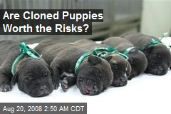 Are Cloned Puppies Worth the Risks?