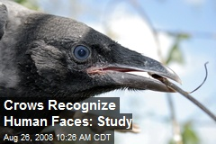 Crows Recognize Human Faces: Study