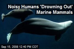 Noisy Humans 'Drowning Out' Marine Mammals