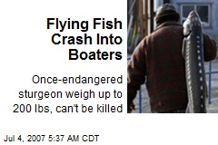 Flying Fish Crash Into Boaters