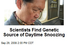 Scientists Find Genetic Source of Daytime Snoozing