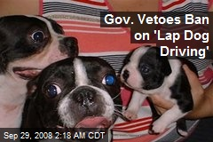 Gov. Vetoes Ban on 'Lap Dog Driving'