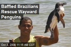 Baffled Brazilians Rescue Wayward Penguins