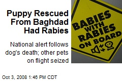 Puppy Rescued From Baghdad Had Rabies