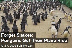 Forget Snakes: Penguins Get Their Plane Ride