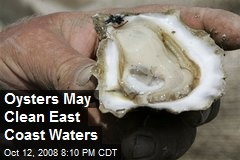 Oysters May Clean East Coast Waters
