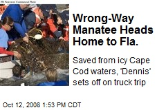 Wrong-Way Manatee Heads Home to Fla.