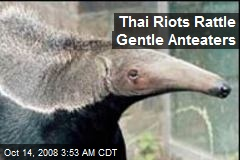 Thai Riots Rattle Gentle Anteaters