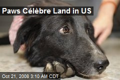 Paws Célèbre Land in US