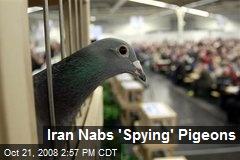 Iran Nabs 'Spying' Pigeons
