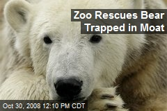 Zoo Rescues Bear Trapped in Moat