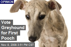 Vote Greyhound for First Pooch