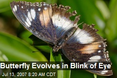 Butterfly Evolves in Blink of Eye