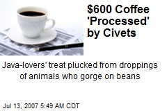 $600 Coffee 'Processed' by Civets