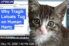 Why Tragik Lolcats Tug on Human Hartz