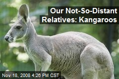 Our Not-So-Distant Relatives: Kangaroos