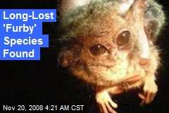 Long-Lost 'Furby' Species Found