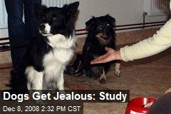 Dogs Get Jealous: Study