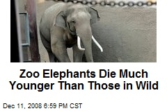 Zoo Elephants Die Much Younger Than Those in Wild