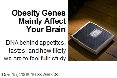 Obesity Genes Mainly Affect Your Brain