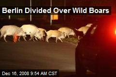 Berlin Divided Over Wild Boars