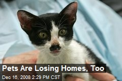Pets Are Losing Homes, Too