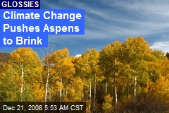Climate Change Pushes Aspens to Brink