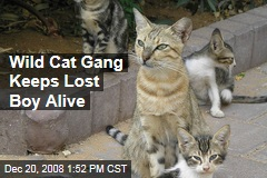 Wild Cat Gang Keeps Lost Boy Alive