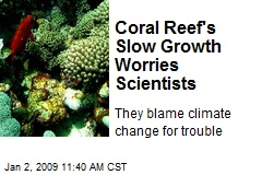 Coral Reef's Slow Growth Worries Scientists