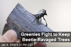 Greenies Fight to Keep Beetle-Ravaged Trees