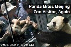 Panda Bites Beijing Zoo Visitor, Again