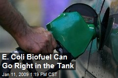 E. Coli Biofuel Can Go Right in the Tank