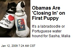 Obamas Are 'Closing In' on First Puppy