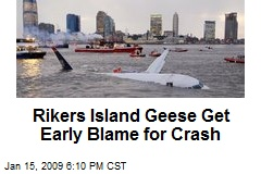 Rikers Island Geese Get Early Blame for Crash