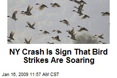 NY Crash Is Sign That Bird Strikes Are Soaring