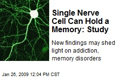Single Nerve Cell Can Hold a Memory: Study