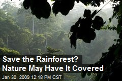 Save the Rainforest? Nature May Have It Covered