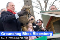 Groundhog Bites Bloomberg