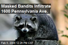 Masked Bandits Infiltrate 1600 Pennsylvania Ave.