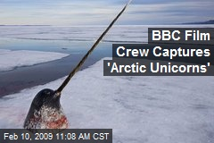 BBC Film Crew Captures 'Arctic Unicorns'