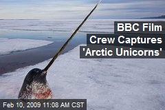 BBC Film Crew Captures 'Arctic Unicorns'