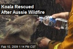 Koala Rescued After Aussie Wildfire