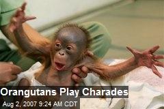 Orangutans Play Charades