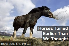 Horses Tamed Earlier Than We Thought