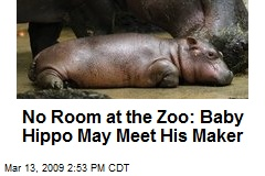 No Room at the Zoo: Baby Hippo May Meet His Maker