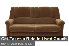 Cat Takes a Ride in Used Couch