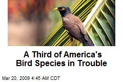 A Third of America's Bird Species in Trouble