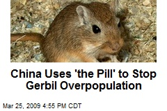 China Uses 'the Pill' to Stop Gerbil Overpopulation