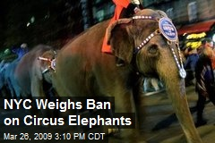 NYC Weighs Ban on Circus Elephants
